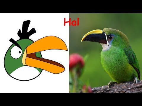 Angry Birds REAL LIFE All Characters