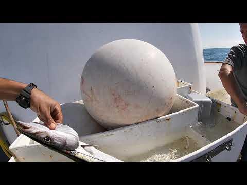 Charter Fishing The Enterprise Pier Point Landing