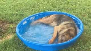 Timber My Service Dog. Loving The Kiddie Pool!
