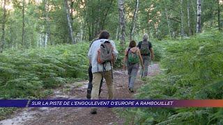 Yvelines | Sur les traces de l'engoulevent d'Europe à Rambouillet