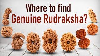 Importance of Rudraksha Beads