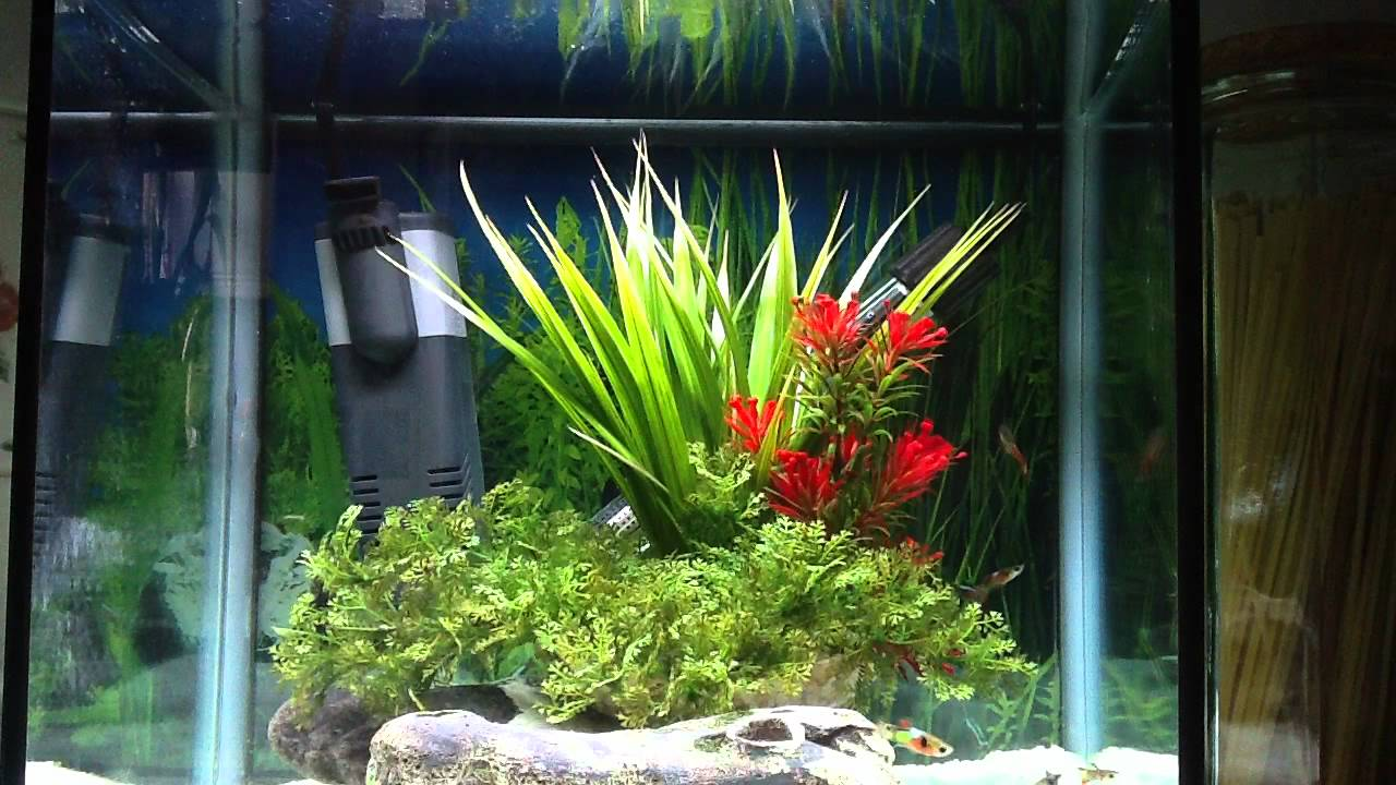 Small nano aquarium fish tank tropical - Small Tropical Fish Tank