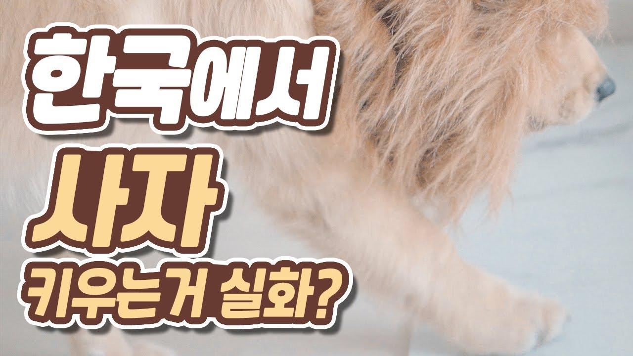 중동 갑부만 키운다는 그 애완동물을 한국에서?