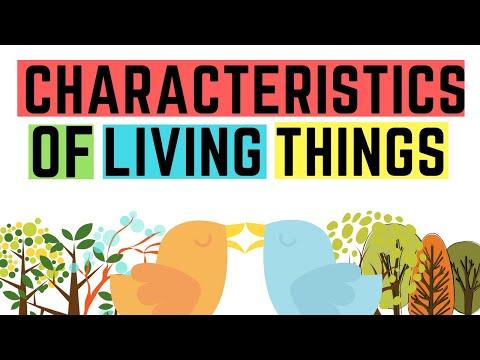 IGCSE BIOLOGY REVISION - [syllabus 1.1] Characteristics of living organisms