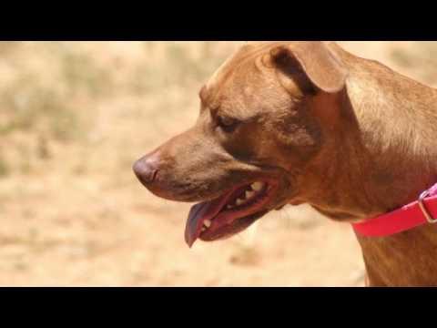 August 25, 2016 Levelland Shelter Dog Album SD 480p