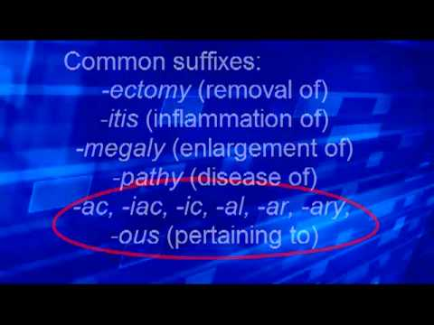 Med Term 2 Roots, prefixes, suffixes