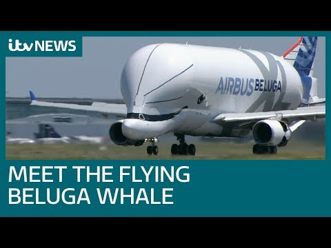 New 'beluga Whale' Airlifter Takes To The Skies | ITV News