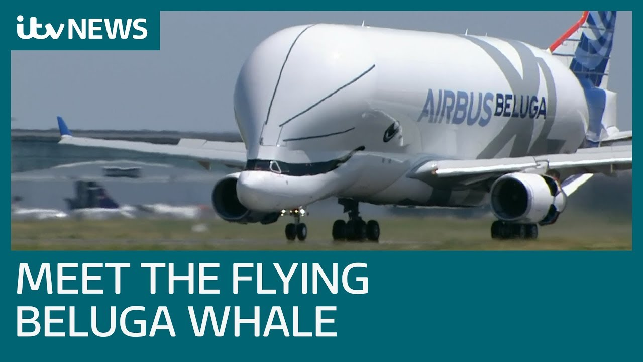 new-beluga-whale-airlifter-takes-to-the-skies-itv-news