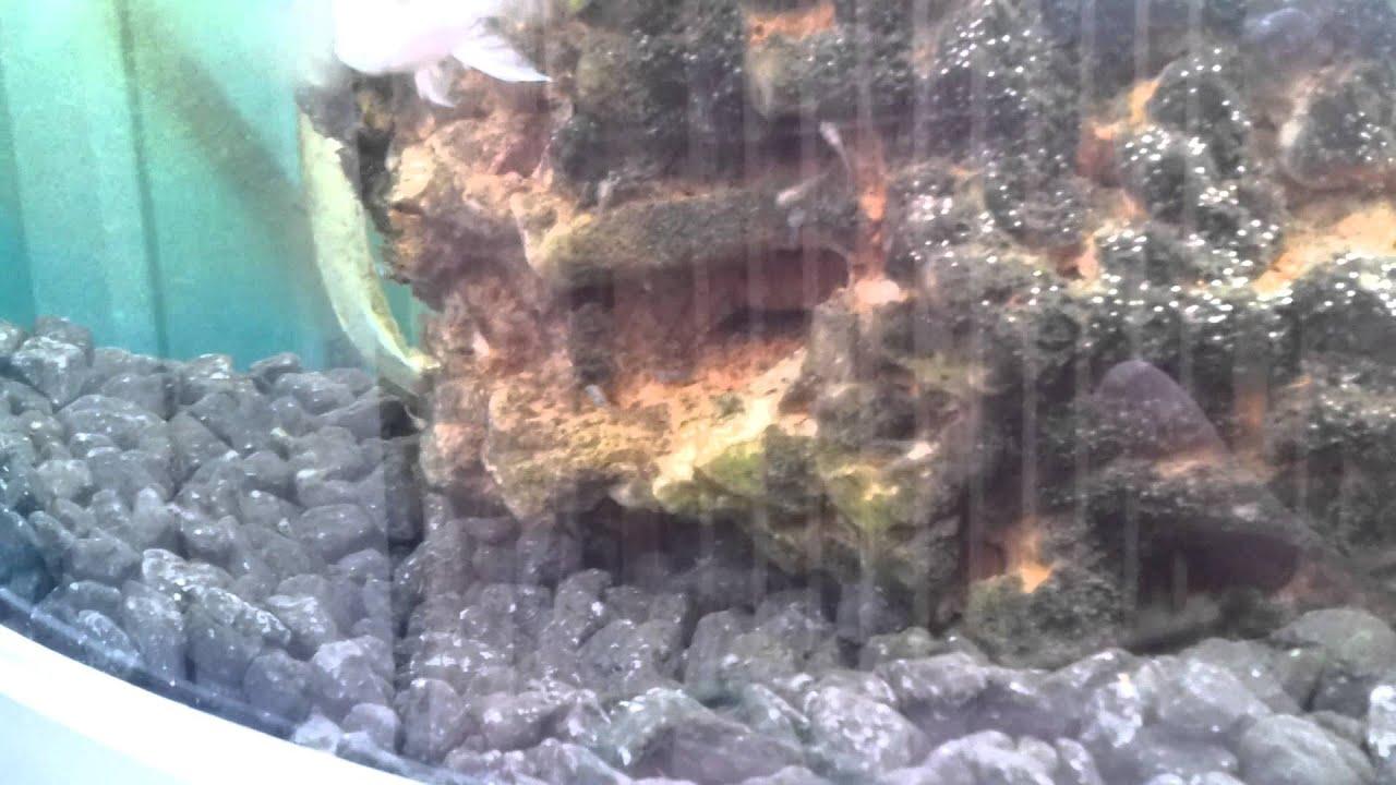 Download parrot fish  babys.mp4