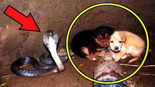 Собачки случайно упали в колодец со змеей, а когда их нашли, люди не поверили своим глазам