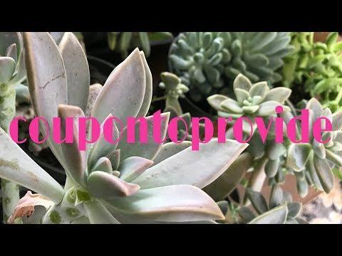 Bates Family Vlog | New House Update | Greenhouse Haul |