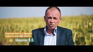 Гибрид подсолнечника ЕС Белла: российские аграрии о своем выборе