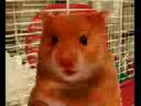 Harry The Hamster