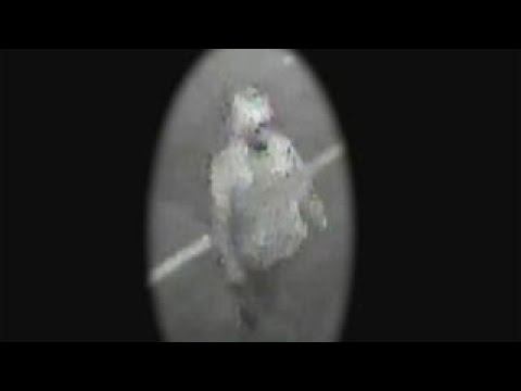 New surveillance video released in Tampa killings