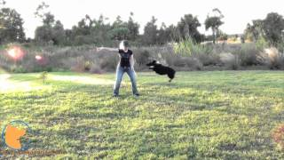 Chopper's Amazing Dog Tricks And Skills (florida Dog Training At Fine-tuned Canines)
