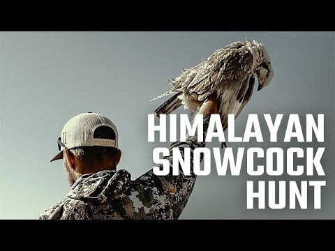 Himalayan Snowcock Hunting in the Ruby Mountains - Holy Grail