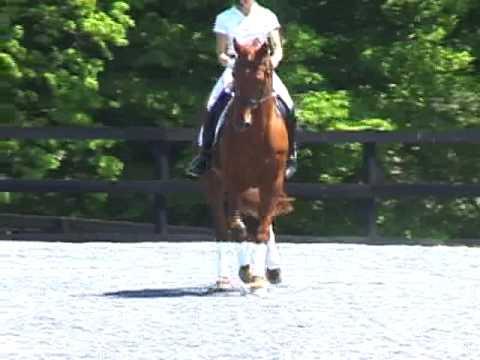 Adonis Stallion Video