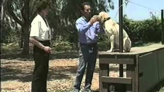Canadapets Video Series - Tri Tronics Hold Command For Bird Dogs Part 5 Of 6