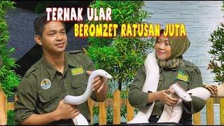 Beternak Ular Dengan Omzet Ratusan Juta Rupiah | HITAM PUTIH (16/01/20) Part 2