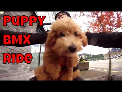 Puppy BMX Ride - Just Gin: Cutest Dog Ever! VOL.16