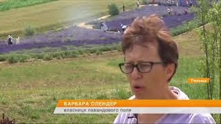видео Купить саженцы лаванды в Украине