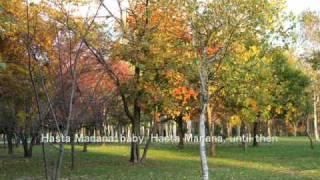2011/10/14pm 北国は秋・・。 山から紅葉が降りてきて、枯れ葉が舞 い始め...