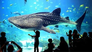 BIGGEST Aquariums On Earth!