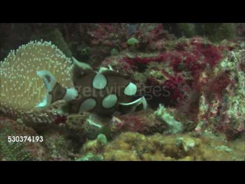 Effects Of Dissolved Oxygen On Aquatic Life