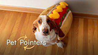Comfy Pet Costume Tips   Pet Pointers
