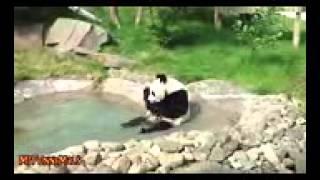 ►►  Животные любят ванную