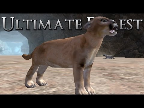 Cougar Kittens Playing in the Den!! • Ultimate Forest Simulator
