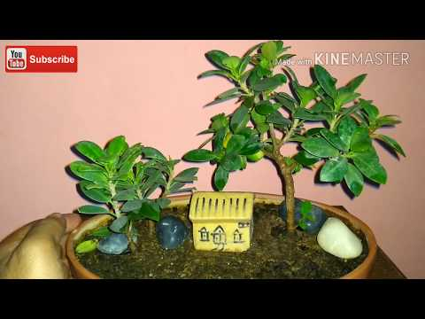 Feel nature in your hand/ Make your own bonsai Landscape.(Update)