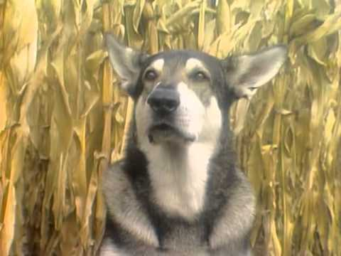 The Littlest Hobo Season 1 Episode 24 The Further Adventures Of Willy And Kate Part 2
