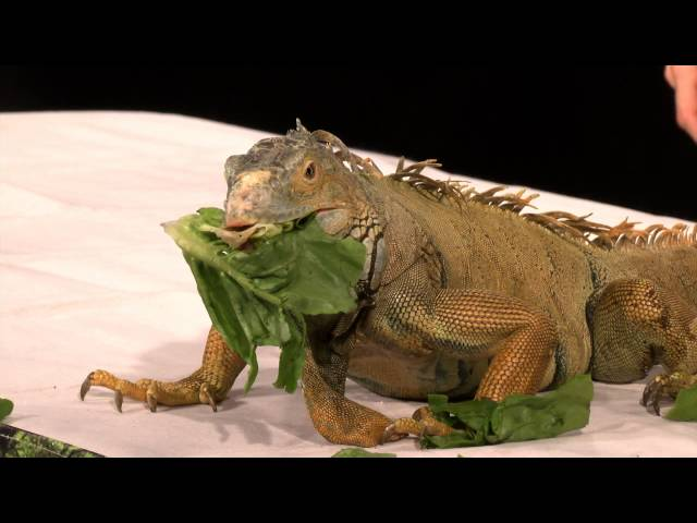 The Creature Teachers: Episode 1 - Rainforest