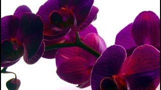 changes with orchids after watering garlic, garlic watering, transplanting orchids