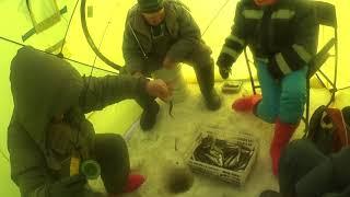 Рыбалка на кешащим корюшкой озере Подлёдные съёмки Тягаем рыбу