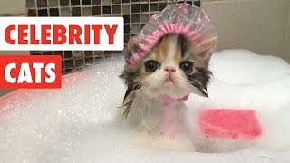 Celebrity Cats | Funny Pet Video Compilation 2017