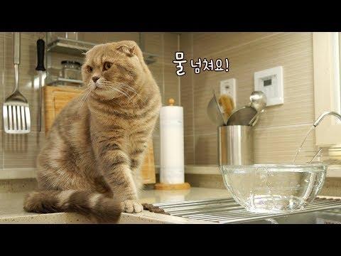 고양이가 물 아껴쓰라고 눈치를 줘요