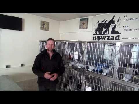 Kuchi dog spay neuter