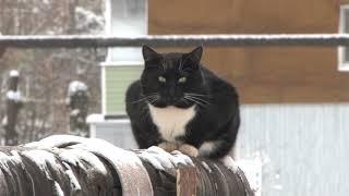 Бездомные кошки зимой в городе