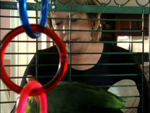 Ambulance Girl 2005 Movie Trailer