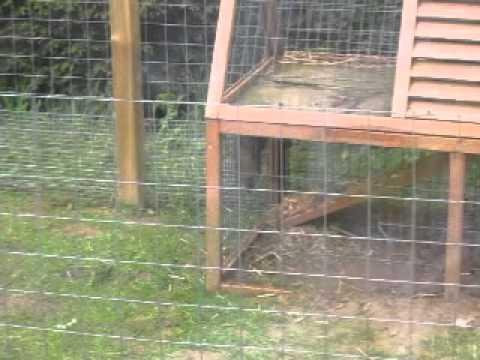 bunzing dringt konijnenhok binnen
