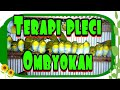 Terapi Pleci Macet Bunyi Terapi Pleci Ombyokan  Mp3 - Mp4 Download