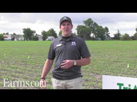 Powerful Weed Control By Nufarm Agriculture's TriActor Soybean Herbicide