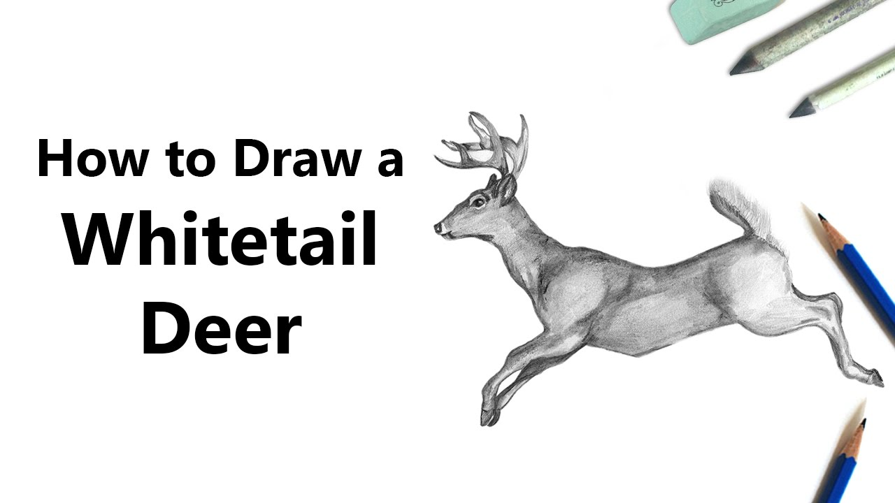 It is a graphic of Dashing White Tailed Deer Drawing