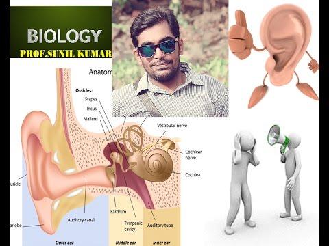How to draw human ear easy way to learn human ear youtube how to draw human ear easy way to learn human ear ccuart Choice Image