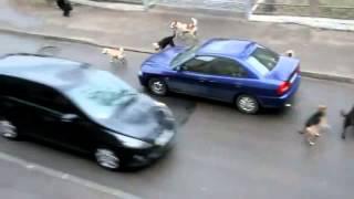 Bezpańskie stada psów atakują ludzi w Rosji
