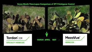 MezaVue™ Herbicide — The New Standard in Pricklypear Control