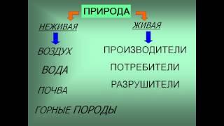жизнь экосистемы 3 класс презентация