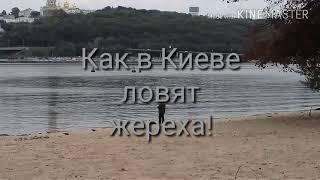 Ловля ЖЕРЕХА по киевски!